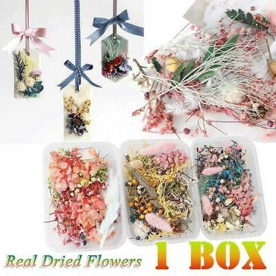 1Box Real Dried Leaf Flowers Plant Herbarium Resin Casting DIY Jewelry Making ~