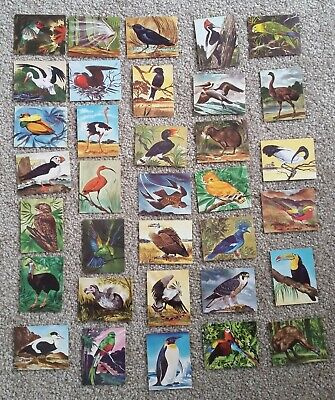 Greggs Jelly Packets Bird Cards - New Zealand, C1960  - Lot of 34
