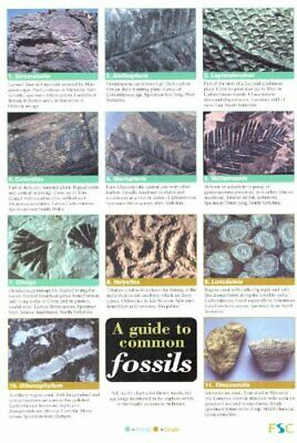 A Guide to Common Fossils by Pellant, Chris Wallchart Book The Cheap Fast Free