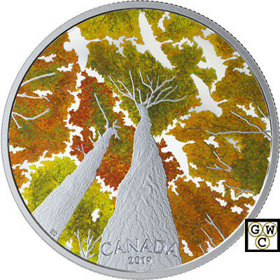 2019 'The Canada Goose-Canadian Canopy' Proof $30 Fine Silver 2oz.Coin (18661)NT