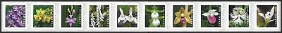 USA Sc. NEW (55c) Wild Orchids 2020 MNH coil strip of 10
