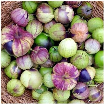 Salsa Physalis Purple Tomatillo Seeds Compact Vines Fruit bursting with Flavor