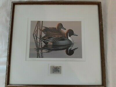"""RING-NECKED DUCK/"""" Color Plate Lithograph 1936 Vintage FUERTES BIRDS #17 /""""SCAUPS"""
