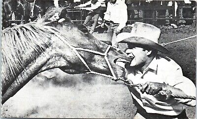 Postcard Cowboy Biting Horse Rodeo Reproduction by Klutz Press
