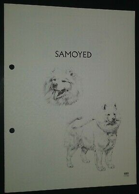 Samoyed RAS Kennel Control Breed Standards M Davidson Ill