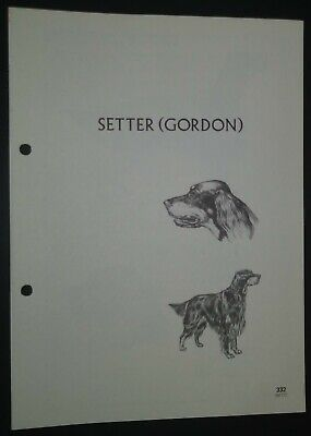 Setter (Gordon) RAS Kennel Control Breed Standards M Davidson Ill