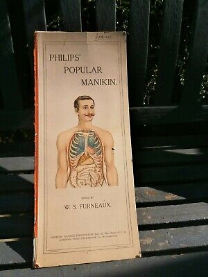 Victorian Antique Medical Anatomical Philips Manikin Human Body Model Book Male