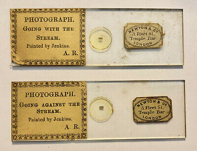 Pair of Newton Microdot Microscopic Photo Glass Slides – Paintings by Jenkins