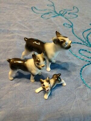 Vintage boston terrier Collectible