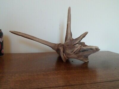 Driftwood Pieces, x5  branching random shapes. viv, craft or table centre