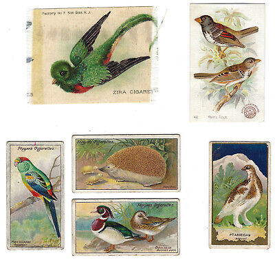5 Birds And A Hedgehog Tobacco Cards & A Silk, Zira, Mecca, Nottingham