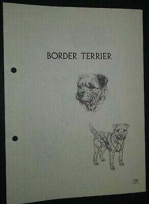 Border Terrier RAS Kennel Control Breed Standards M Davidson Ill