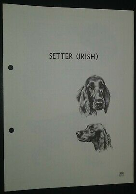 Setter (Irish) RAS Kennel Control Breed Standards M Davidson Ill