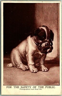 "1907 Animal Postcard Puppy Dog Muzzle / Face Mask ""FOR THE SAFETY OF THE PUBLIC"""