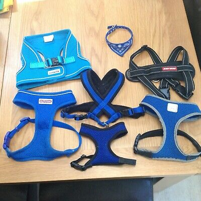 VARIETY OF BLUE DOG HARNESSES FROM VERY SMALL TO LARGE in size