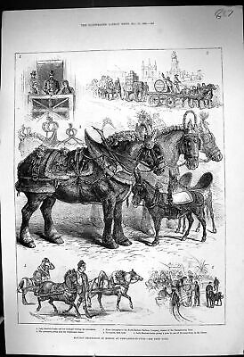 Old 1882 May-Day Procession Horses Newcastle-On-Tyne Burdett-Coutts S Victorian