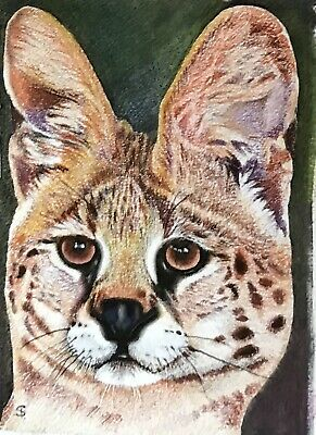 """Serval""  Aceo/Atc, Original Coloured Pencil Drawing."