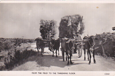 Cyprus Postcard From The Field To The Threshing Floor Soteriou C 1950