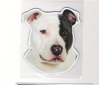 Pit Bull Black and White 4 inch face magnet for car or anything metal     New