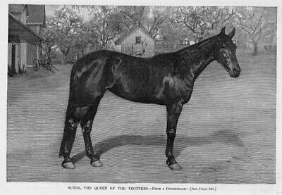 Horses, Sunol Queen Of The Trotters, Antique Engraving