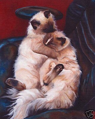 RAGDOLL Cat Art PRINT of Original Vern Oil Painting