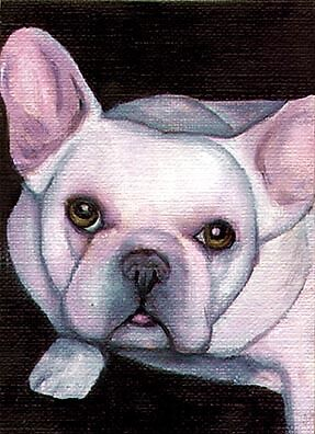 ACEO FRENCH BULLDOG Cream Dog Art PRINT Painting VERN
