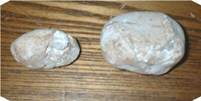 2 SHELL FOSSILS IN SANDSTONE  Northern Minnesota