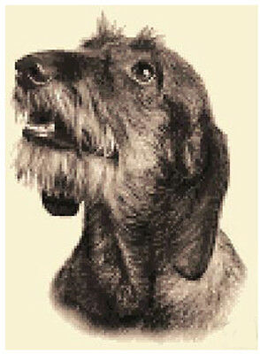 Wire Haired DACHSHUND dog full counted cross stitch kit