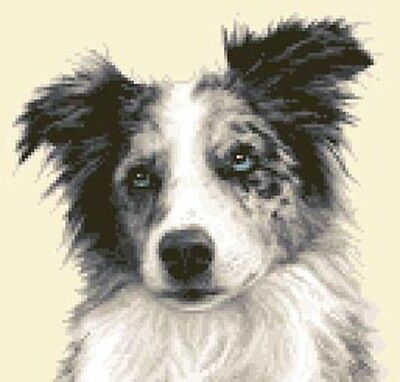 Merle BORDER COLLIE dog  - full counted cross stitch kit