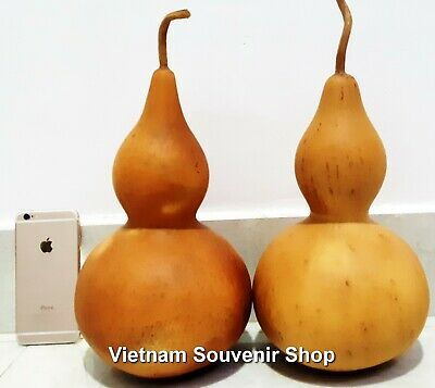 Set of 2 Wine gourd -China decanter to wall decor Planted by Vietnamese Farmers
