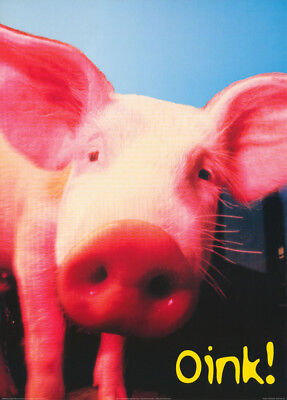 Poster :comical:     Pig - Oink !         Free Shipping !!   #pe1062 Rc32 O
