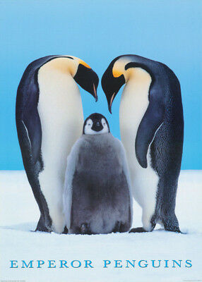 Poster: Animals: Emperor Penquin Family    Free Shipping !!   #pe1137    Rc34 S