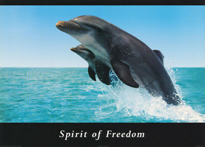 Poster :animal - Spirit Of Freedom - Porpoises - Free Shipping ! #pe1104  Rc47 T
