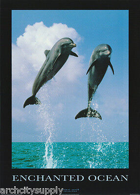Poster - Animal - Enchanted Ocean - Dolphins - - Free Shipping ! #pe1047 Lw7 A