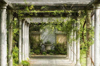 Pergola-Wall Mural-12'wide by 8'high