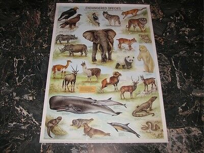 POSTER / ANIMALI A RISCHIO _ ENDANGERED SPECIES 98x68