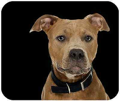Mouse Pad Custom Thick Dog Mousepad - Pit Bull - Add Any Text Free
