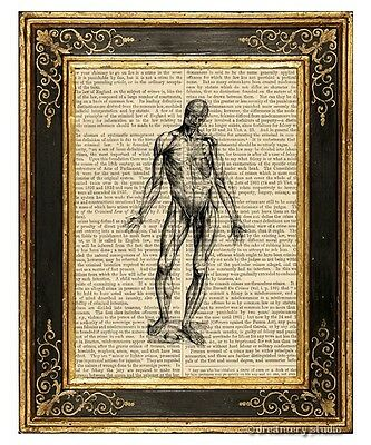Muscular System #2 Art Print on Antique Book Page Vintage Medical Illustration