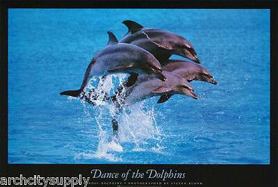 Poster : Animal: Dance Of The  Dolphins  - Free Shipping ! #f3009797  Rw13 B