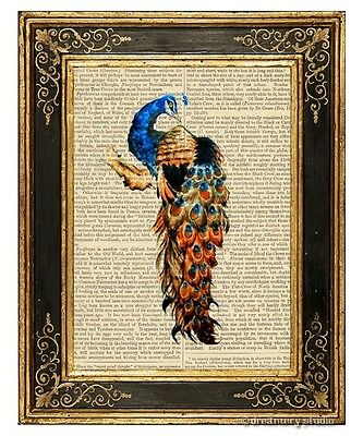 Peacock #4 Art Print on Antique Book Page Vintage Illustration Peafowl Bird
