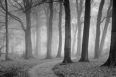The Winding Path-Wall Mural-12'wide by 8'high-Blk & Wht