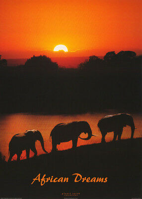 Poster : Photo: Animals:african Dreams -  Elephants - Free Ship #pe1021  Rc33 K