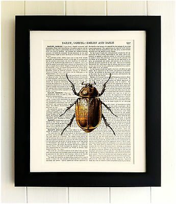 ART PRINT ON OLD ANTIQUE BOOK PAGE *FRAMED*  Beetle / Insect, Vintage, Upcycled