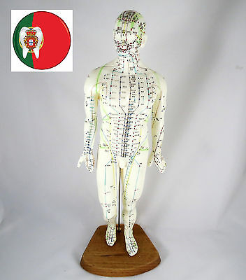 Professional Medical and Educational Acupuncture Male body 46cm IT-092 ARTMED