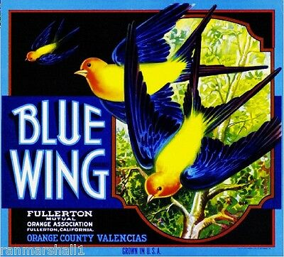 Fullerton Blue Wing Robin Birds  Orange Citrus Fruit Crate Label Art Print