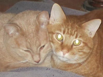 Sponsor Cassie /& Callie--Rescued SCOOP Cats for 1 Month-Receive Picture /& Story