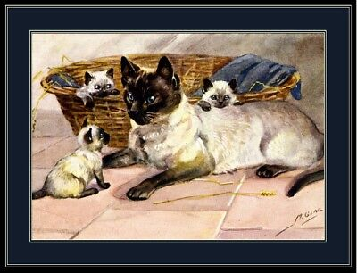 English Print Siamese Cat Kitten Family Pet Art Picture