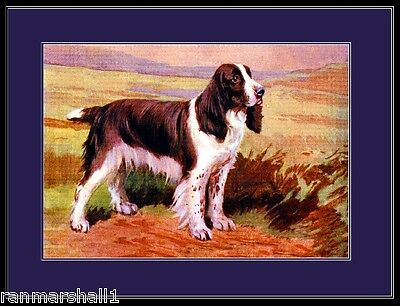 Picture Print English Springer Spaniel Puppy Dog Standing Art