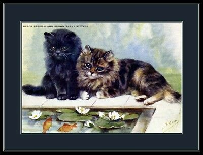 English Picture Persian Tabby Kitten Cat Art Print