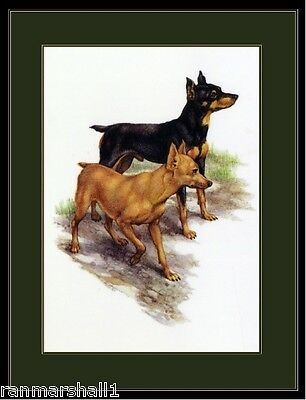 Picture Miniature Pinscher Dog Duo Dogs Puppy Puppies Vintage Poster Art Print